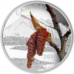 2015 Canadian $20 Forests of Canada: Boreal Balsam Poplar - 1 oz Fine Silver Coin