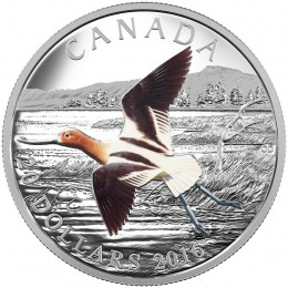 2016 Canadian $20 The Migratory Birds Convention, 100 Years of Protection: The American Avocet - 1 oz Fine Silver Coin