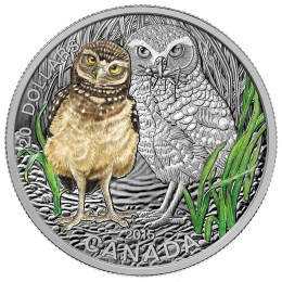 2015 Canadian $20 Baby Animals: Burrowing Owl - 1 oz Fine Silver Coloured Coin